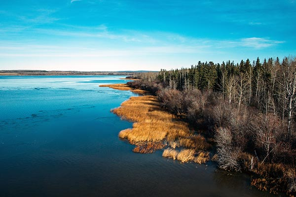 aerial-view-of-lake-shore-and-trees-600x400